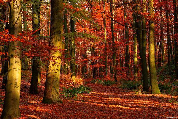 Осень - 5