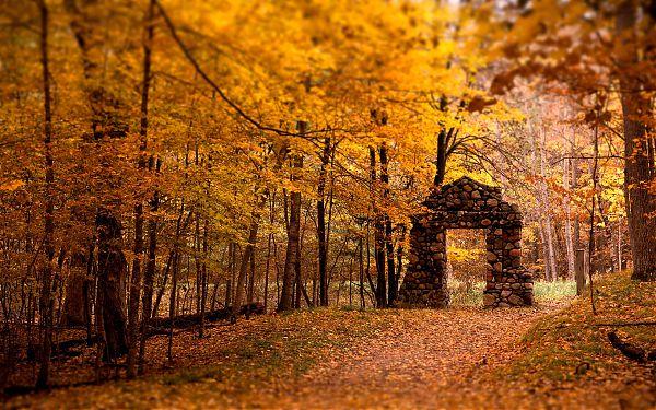 Осень - 6