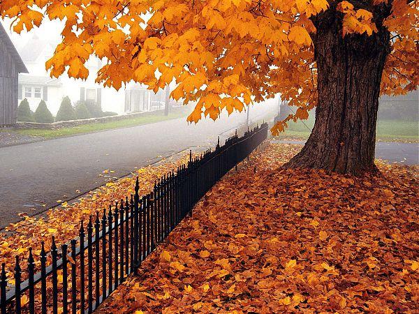 Осень - 13