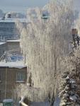 Зимний вид из окна - фото3
