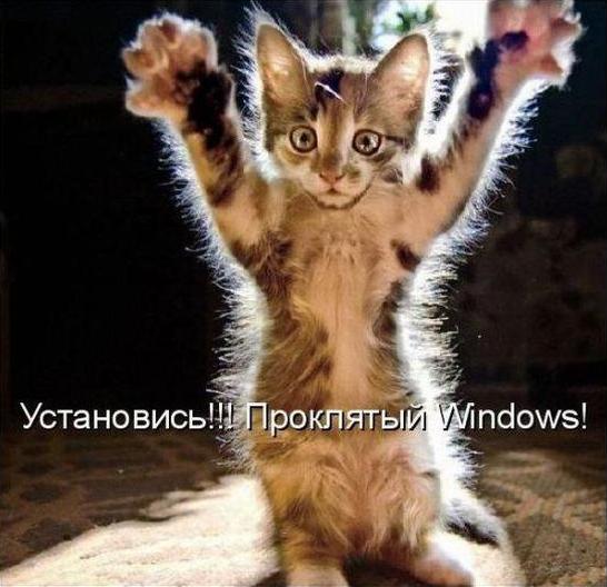 Кот - шаман