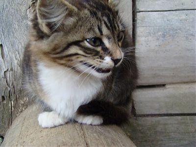 Яснополянские коты