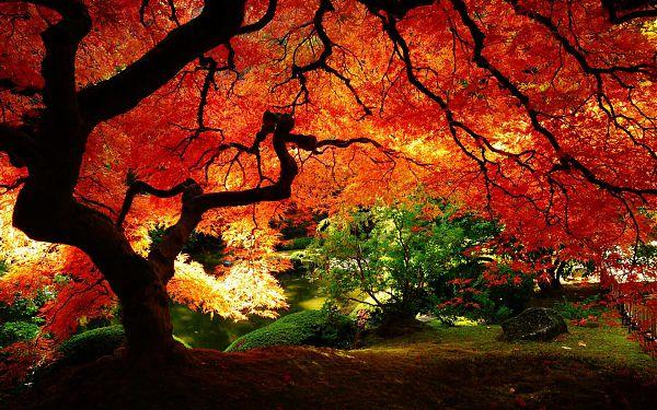 Осень - 1