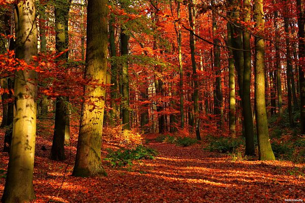 Осень - 2