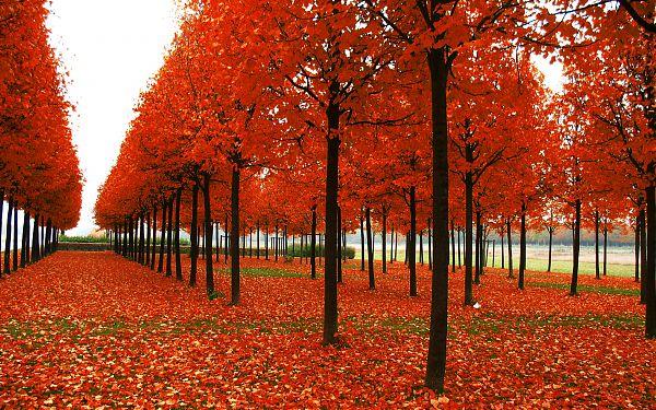 Осень - 9