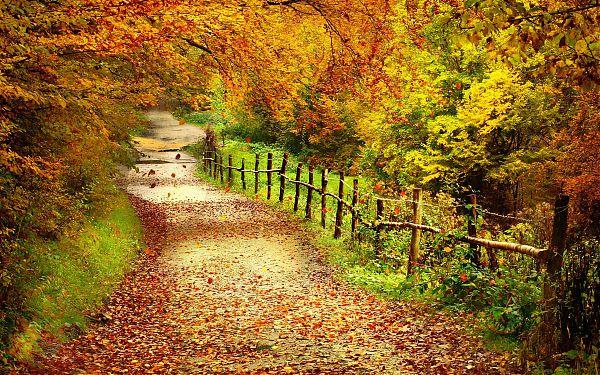 Осень - 16