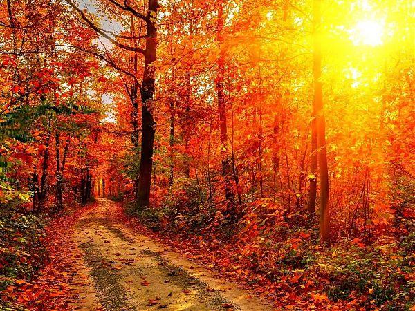 Осень - 19